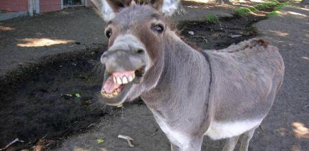 Derek the Donkey