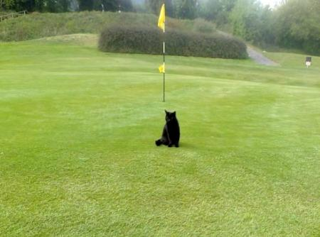 Golfer's ace down to dead black cat
