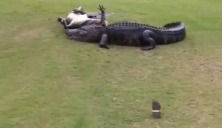Gators wrestle to the death