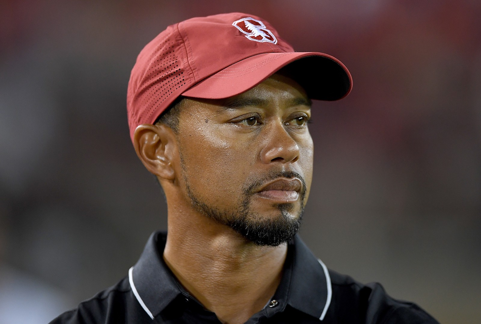 Why Did Tiger Call It Off?