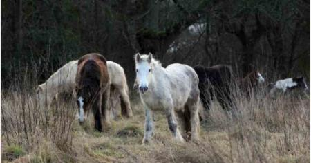 Chaos caused by abandoned horses