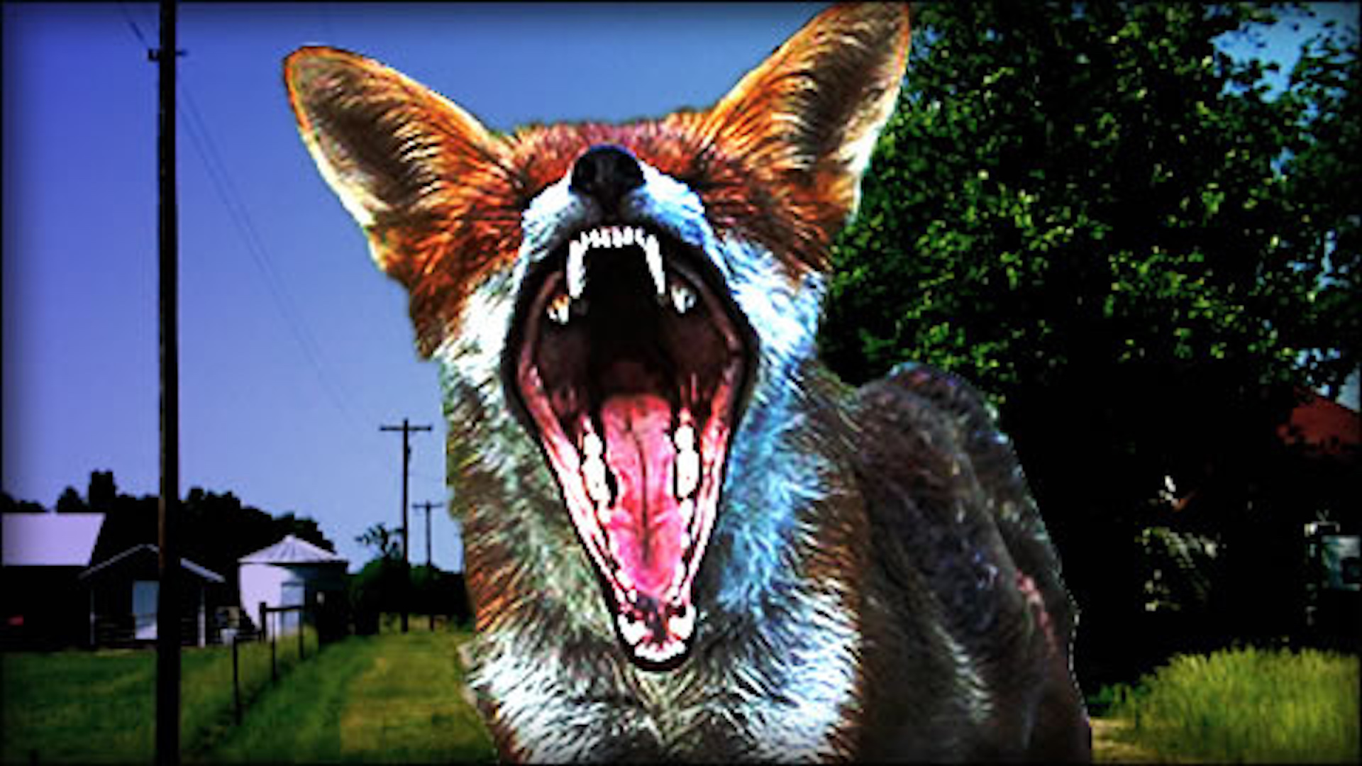Rabid fox attacks golfer