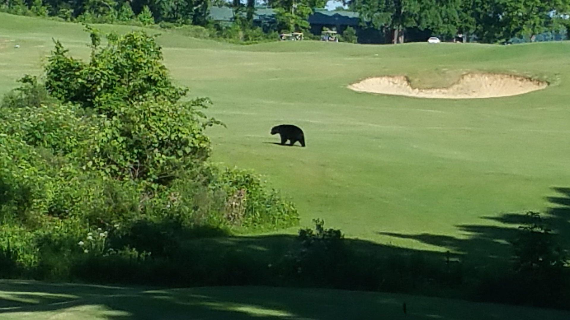 Black bear taunts golfers in Alaska