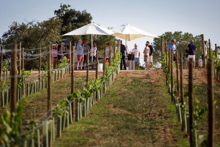 PGA Catalunya Resort creates its own vineyard