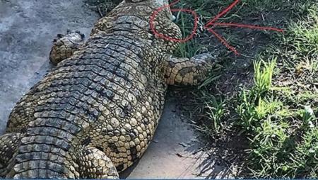 Joost Luiten's crocodile bunker dilemna at NetBank Challenge