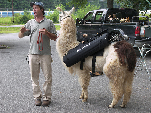 Goat caddies are back in Oregon!!