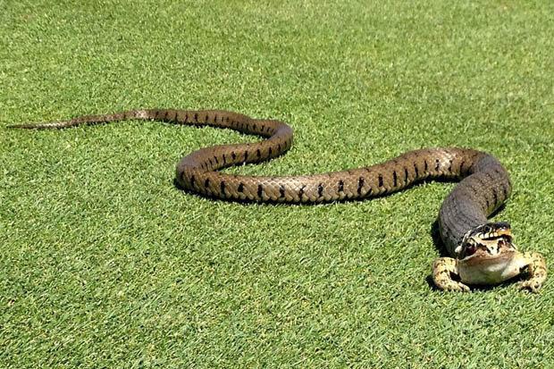 Golf's Top 18 most dangerous courses