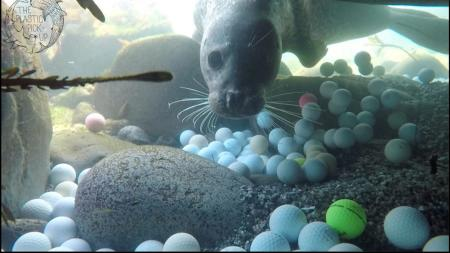 Californian teen retrieves thousands of lost golf balls
