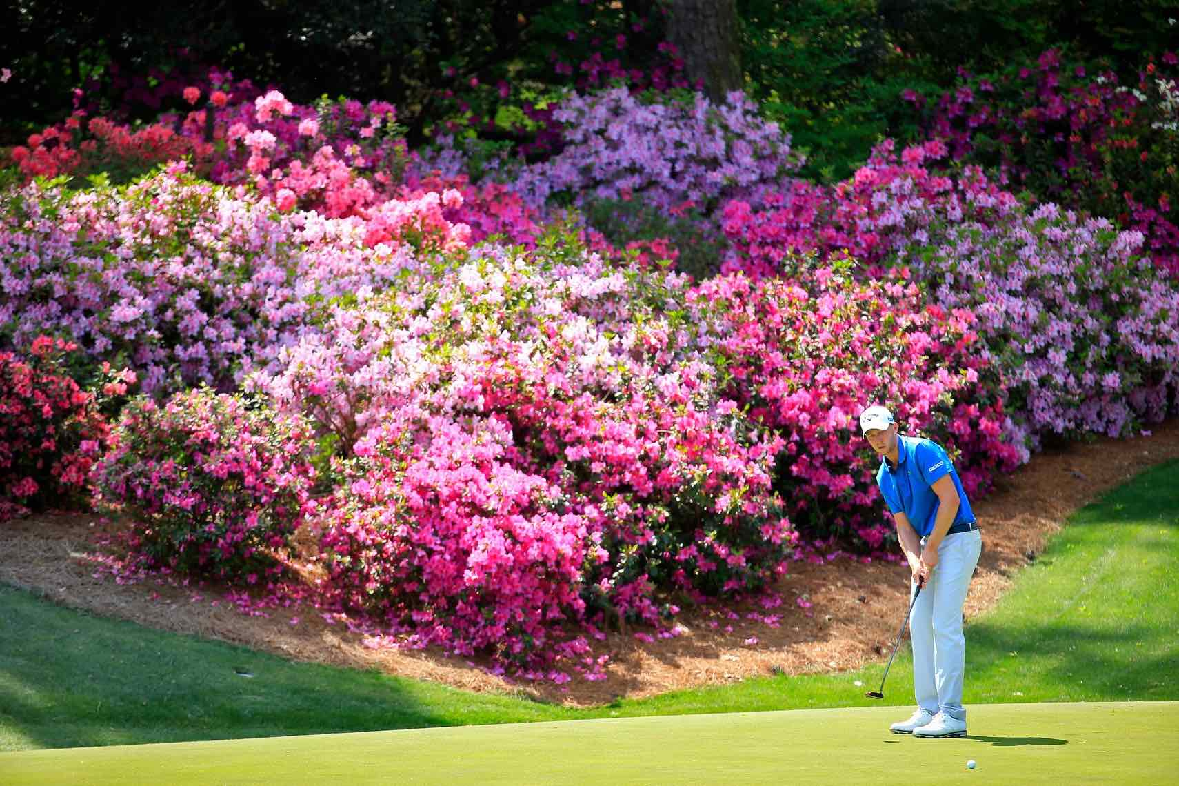 Augusta memories: The mystery of the faulty flowers