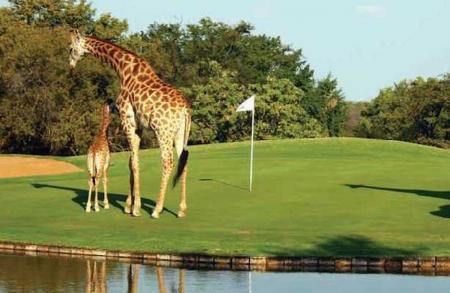 Golf Course Curios Part2